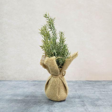 Snowy Pine Tree In Burlap Sack (Pk 3)