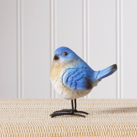 Birds & Accessories